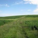 plantacion de soja-1
